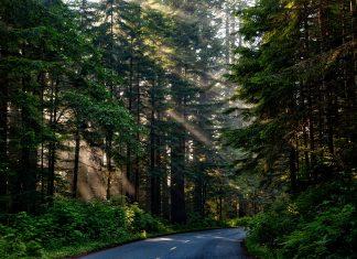 drzewa przy gryfickich drogach