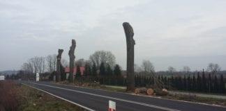 wycinka drzew na trasie Gryfice Kamien Pomorski