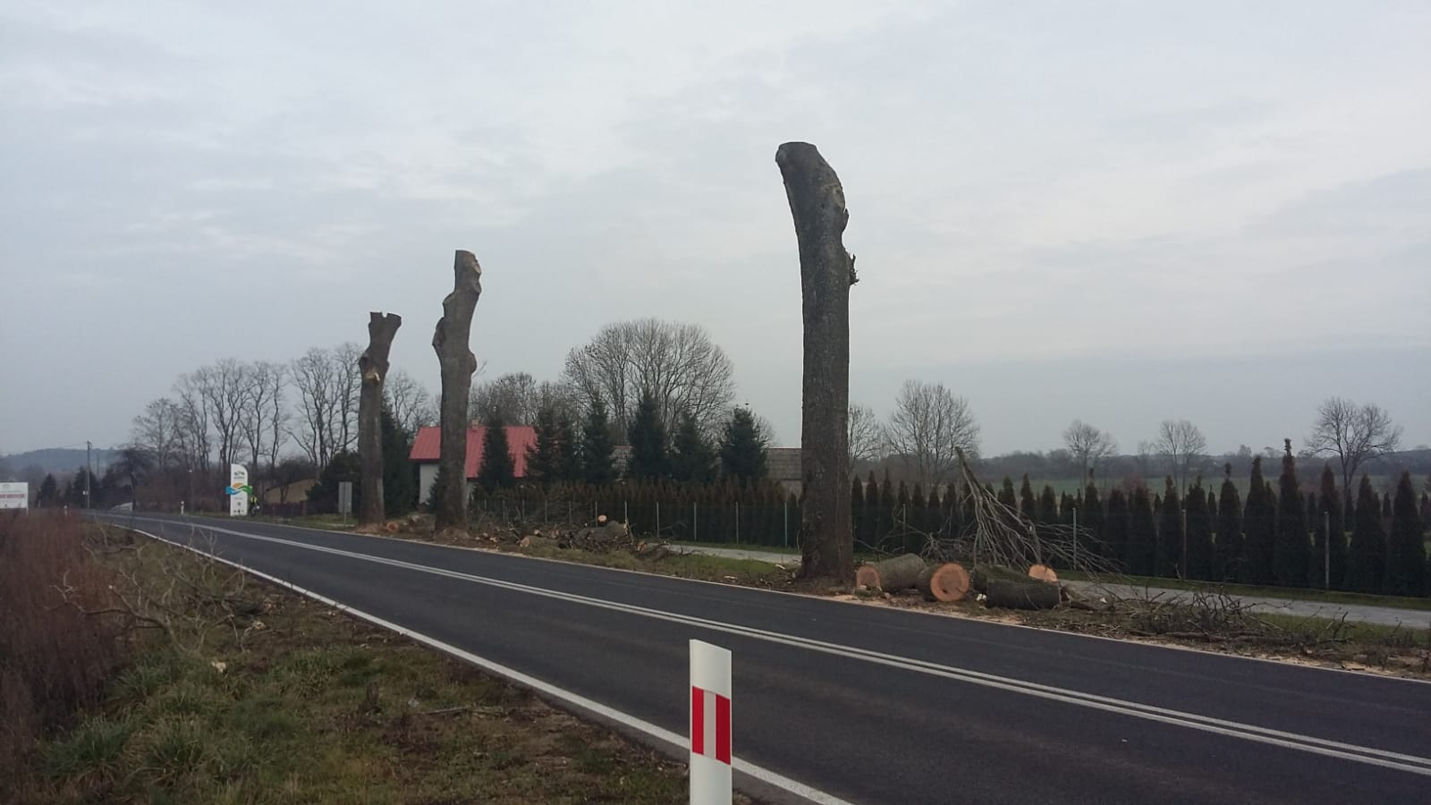 Wycinka drzew na trasie w kierunku Kamienia Pomorskiego
