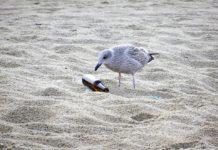 W sobotę, 25 maja, w Rewalu rusza akcja sprzątania plaży.