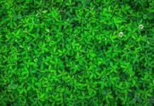 zielono